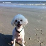 The Lowcountry Veterinarian Dr Stacey Levin